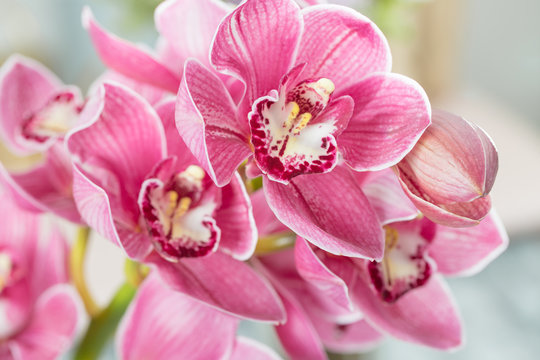 Pink orchid flower on light background. Light pastel poster with orchids phalaenopsis.