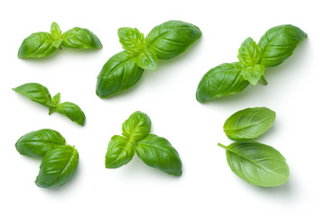 Photo sur Toile Condiment Basil Leaves Isolated on White Background