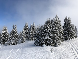 forest under the snow. France