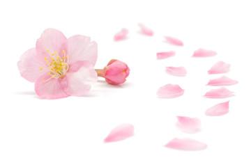 桜 花びら 春 背景