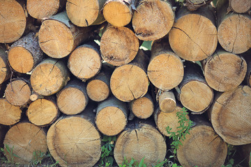 Background of cut stacked timber