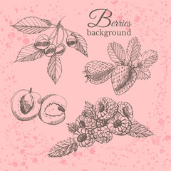 Hand drawn sketch with berries on  vintage background. Vector illustration strawberry, raspberries, currant, cherry, apicot.
