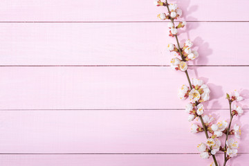 Pink  wooden background with branches of blossoming apricot and copy space for text.