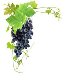 Wall Mural - grappe de raisin rouge et vigne