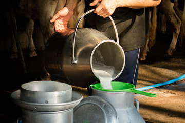 Dairy farming, worker is pouring fresh milk that got from milch cow pour down to the tank, It's the filtration contaminants process.