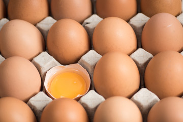 Fresh eggs in the egg panel.