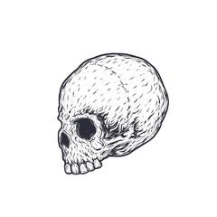 skull vector illustration, t-shirt print