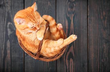 Cute red cat sitting in a basket.