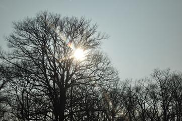 Sonnenreflektion im Winter