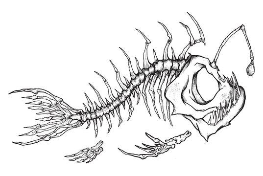 Angler fish skeleton mascot in ink technique.