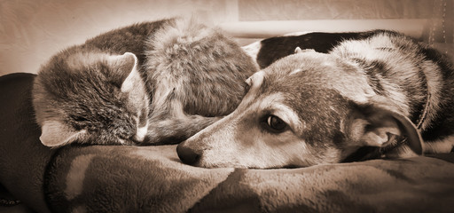 cat and a dog lie together and rest, animal friends