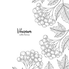 Hand drawn illustrations of viburnum isolated on white background. Detailed frame with viburnum. Engraving sketch vintage style. Applicable for menu, brochures, flyers