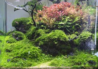 Beautiful tropical planted freshwater aquarium