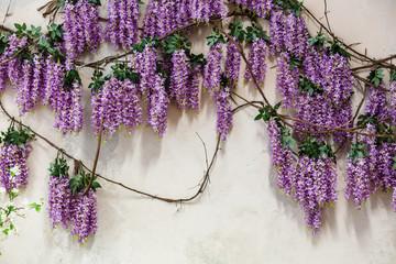 Cascading purple wisteria blossoms