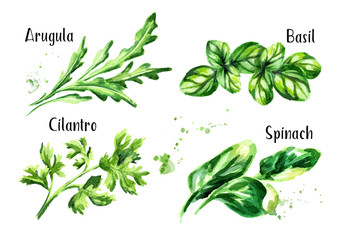Fresh salad herbs set. Watercolor hand drawn illustration isolated on white background