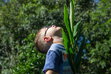 blond boy wearing sunglasses enjoying sun morning and playing with green garden plant