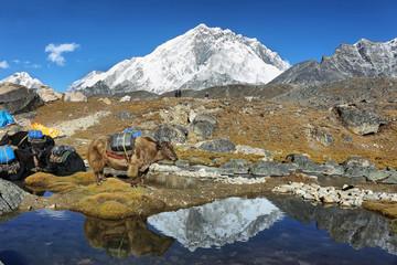 Photo sur Toile Reflexion Nuptse and Lhotse peaks views from Lobuche village