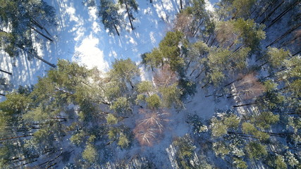 Aerial view of winter frozen forest covered in snow