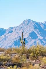 Saguaro National Park in Tucson