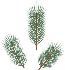 Branches of spruce with green needles on white background