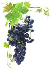 Wall Mural - grappe de raisin et pampres de vigne