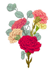 Bouquet carnation schabaud, eucalyptus silver dollar: red, pink, yellow, white flowers, green stems, leaves on white background for Mother's Day, digital draw in engraving vintage style, vector