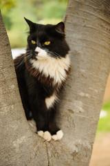 Black and white Tuxedo cat sitting in tree
