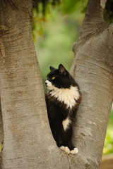 Black and white tuxedo cat outdoor portrait sitting in tree