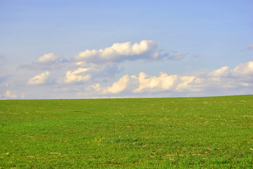 Field of winter wheat in spring, sunny sky and clouds, Ukraine