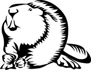 beaver - stylized black and white vector illustration