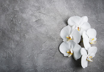 white orchid on the grey stone