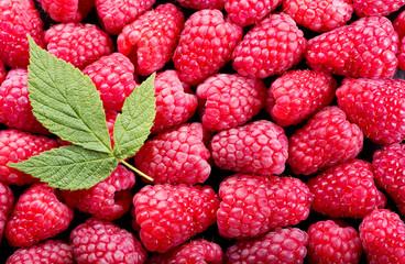 fresh raspberries with leaves, top view