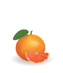Grapefruit with slice. vector illustration