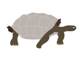 Galapagos giant tortoise silhouette illustration