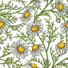 chamomile flower vector pattern