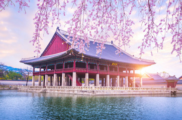 Gyeongbokgung palace with cherry blossom tree in spring time in seoul city of korea, south korea. Wall mural
