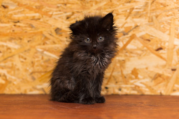 A small black kitten without breed sits on a wooden shelf
