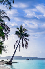 View on palm by remote beach on Phu Quoc island - Vietnam