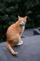 Stray Cats, shooting outdoors