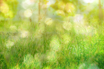The flower of the grass, Blur Background and light Bokeh