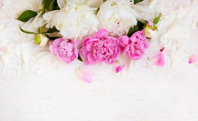 Soft peony flowers background