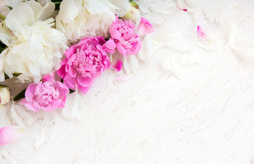 Soft Flower background with peony