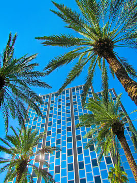 Modern building and palm trees against blue sky background in Miami, Florida, USA.  Beautiful downtown city landscape of famous street - Lincoln Road on a sunny summer day.