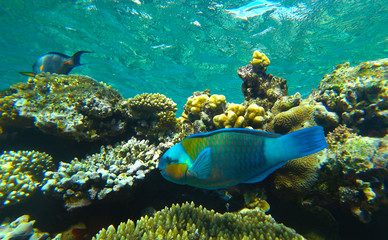 fish parrot and coral reef