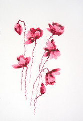 Red poppy flower on white background, watercolor hand painted on paper