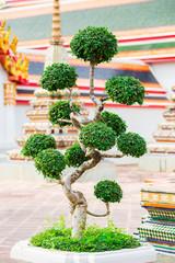 beautiful decorative tree in the garden near the temple in Bangkok