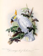 Illustration of a bird.