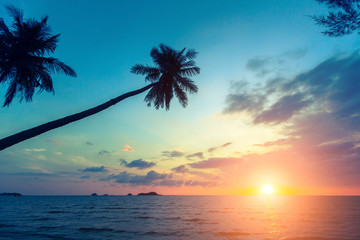 Palm trees silhouettes on a tropical sea beach during beautiful sunset.