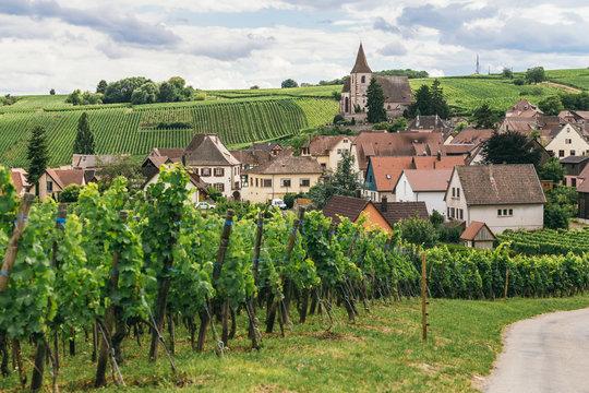 grape fields in Burgundy