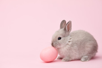 Easter bunny rabbit with pink painted egg on pink background. Easter holiday concept. Wall mural